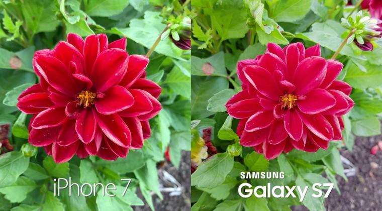 iPhone 7 vs Galaxy S7: камера
